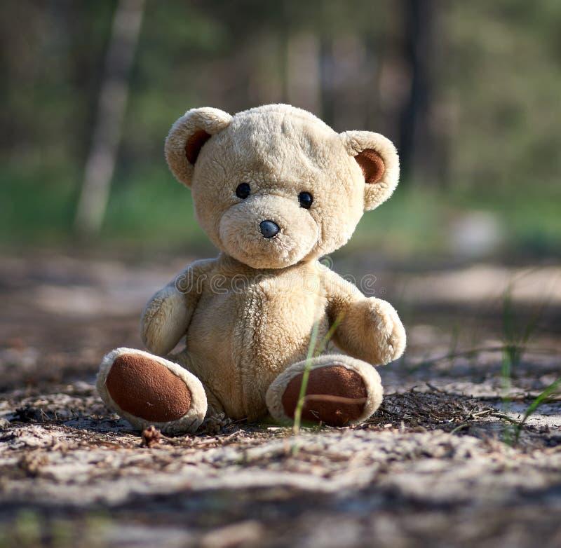 verlaten bruine teddybeerzitting in het midden van het bos in de avond stock afbeelding
