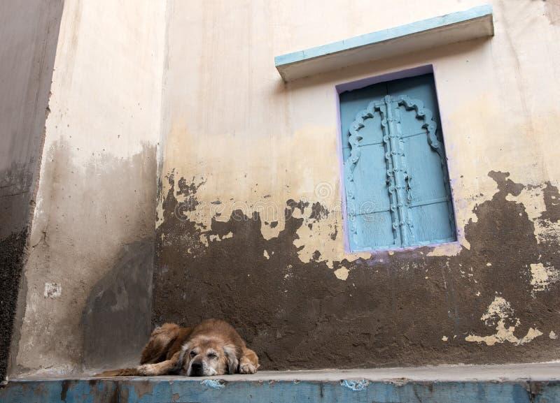 Verlaten dakloze hondslaap buiten een huis royalty-vrije stock fotografie