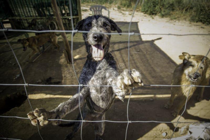 Verlaten en gekooide honden royalty-vrije stock afbeeldingen