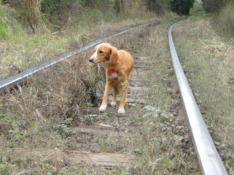 Verlaten hond stock foto