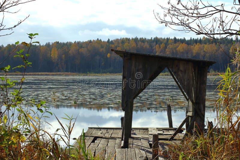 Verlaten houten pijler bij het overwoekerde meer stock foto's