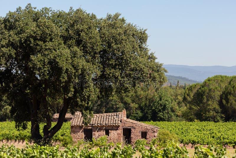 Verlaten huis in wijngaard royalty-vrije stock foto's