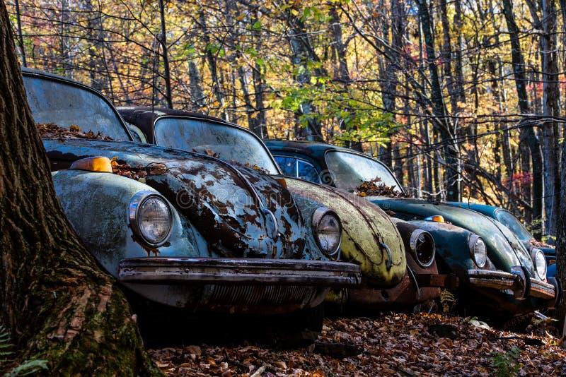 Verlaten Keverauto's & Autumn Leaves - Verlaten Troepyard - Pennsylvania royalty-vrije stock afbeeldingen