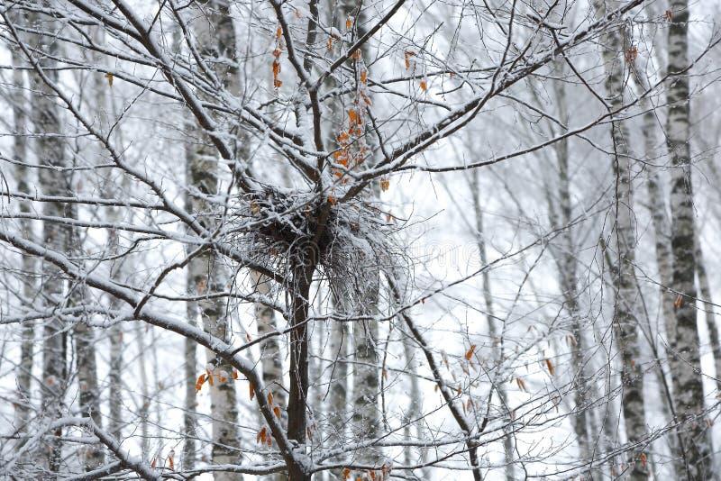 Verlaten leeg vogelnest op tak in de winter met sneeuw royalty-vrije stock foto's