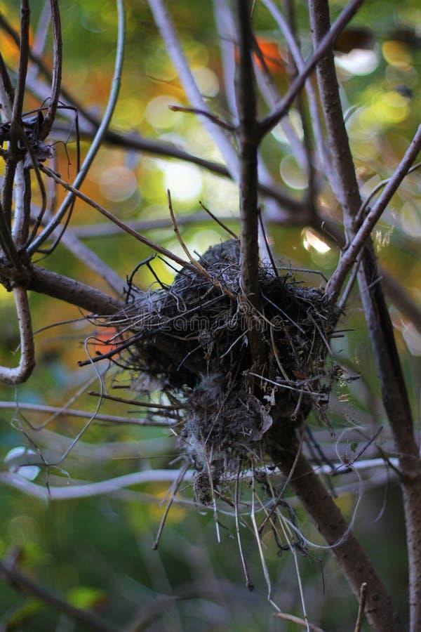 Verlaten nest stock foto