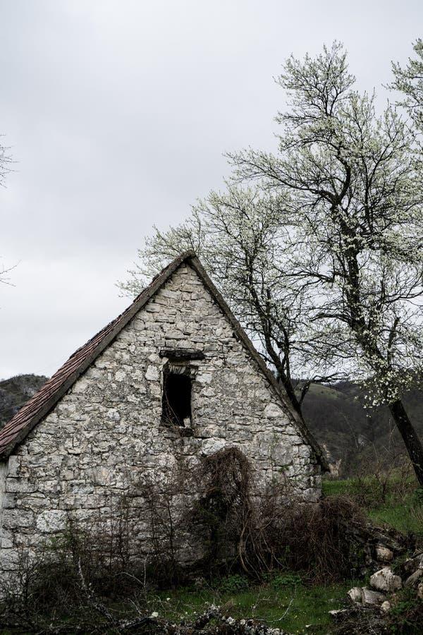 Verlaten oud steen landelijk huis Het huis van het dorp Verlaten achtervolgde steenhuis en landweg in het hout Boom witte bloesem stock fotografie