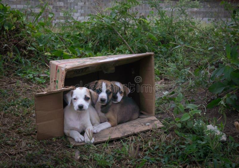Verlaten puppy in een kartondoos stock fotografie