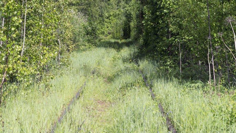 Verlaten spoorweg in het hout over de rivier royalty-vrije stock foto's