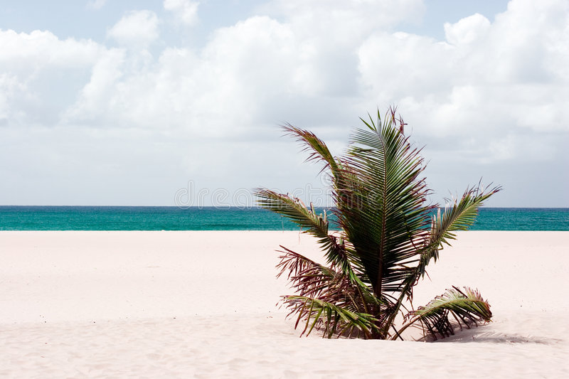 Verlaten strand stock foto's