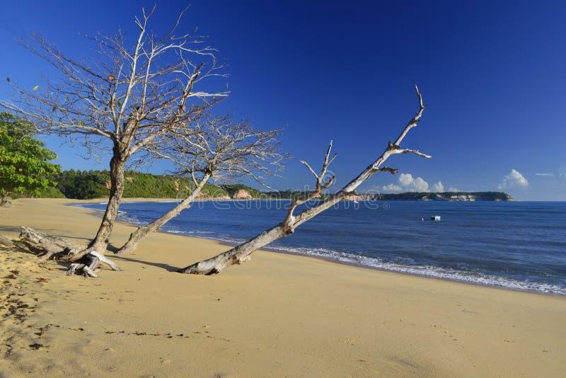 Verlaten strand in Brazilië die door houten boot gaan royalty-vrije stock foto's