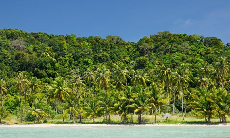 Verlaten tropisch strand met kokosnotenpalmen en wit zand onder blauwe hemel op Koh Chang-eiland, Thailand royalty-vrije stock foto