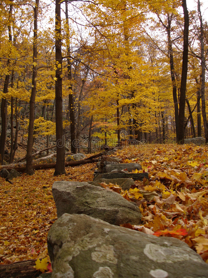 Verlaten weg die door gebladerte op het park van de Staat Harriman, NY wordt behandeld.   stock afbeeldingen