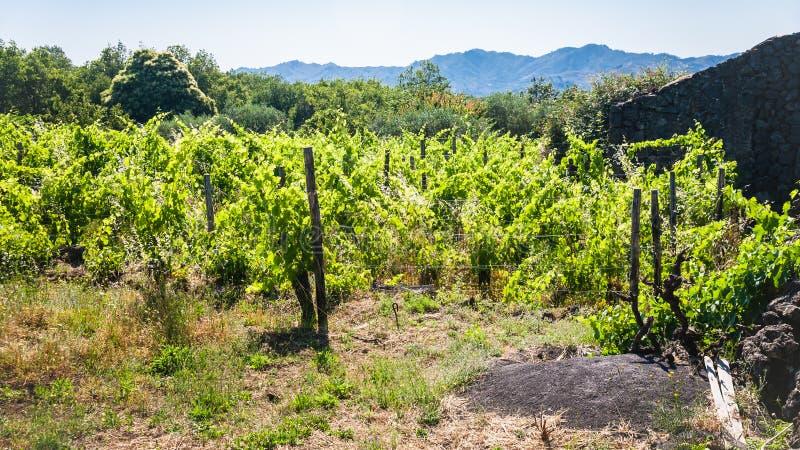 Verlaten wijngaard en landelijk huis op Etna stock foto