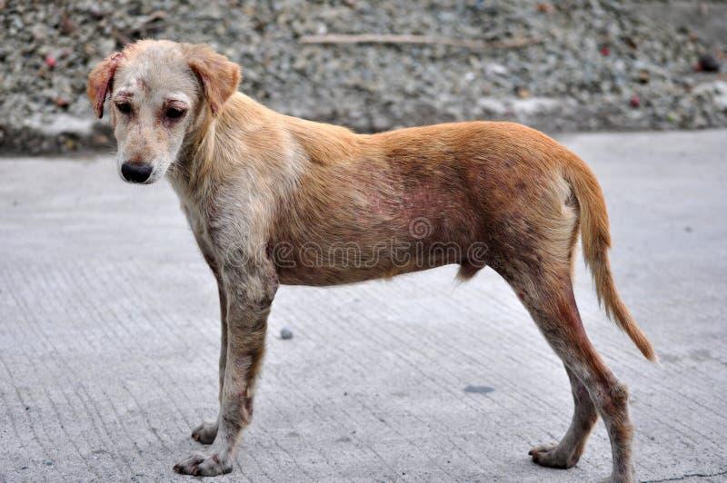 Verletzter Hund stockbild