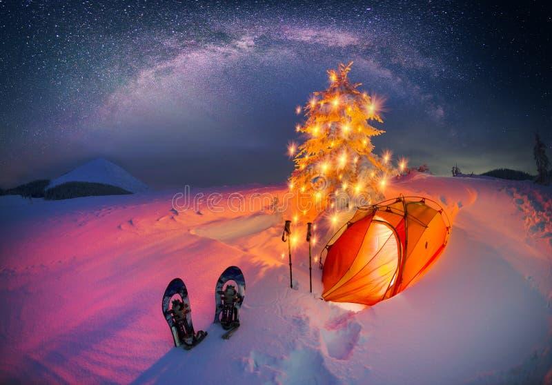 Verlicht de winterbos in de Karpaten stock fotografie