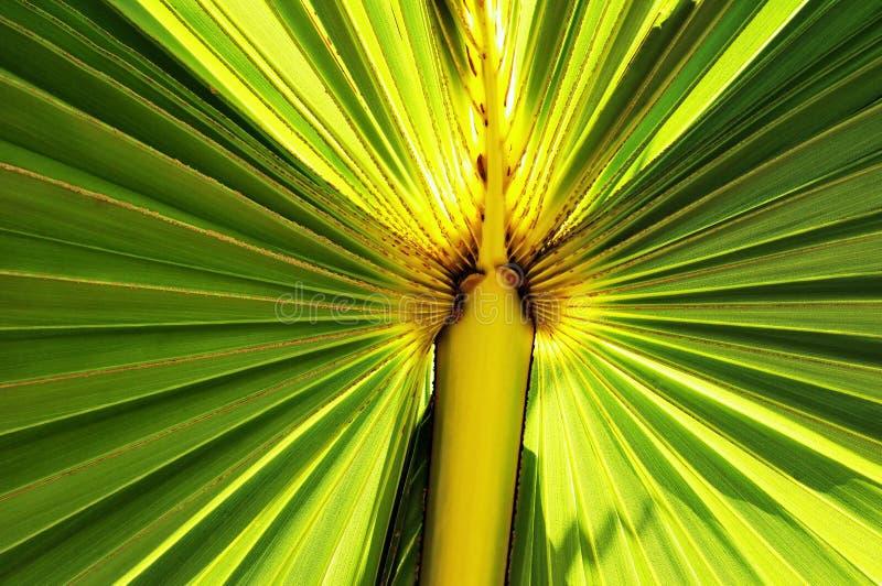 Verlicht Palmblad stock afbeelding