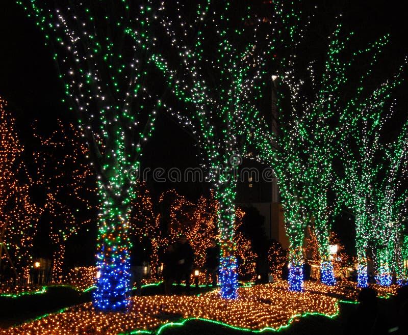 Verlichte bomen stock afbeelding. Afbeelding bestaande uit mooi ...
