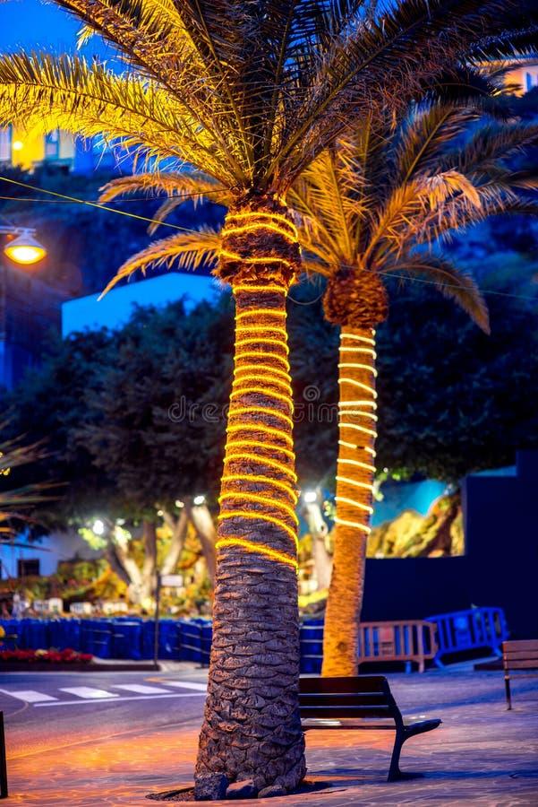 Verlichte palm royalty-vrije stock afbeelding