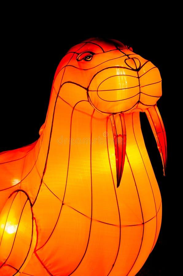 Verlichte walrus royalty-vrije stock afbeelding