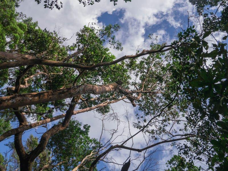 Verloren in de wildernis stock fotografie