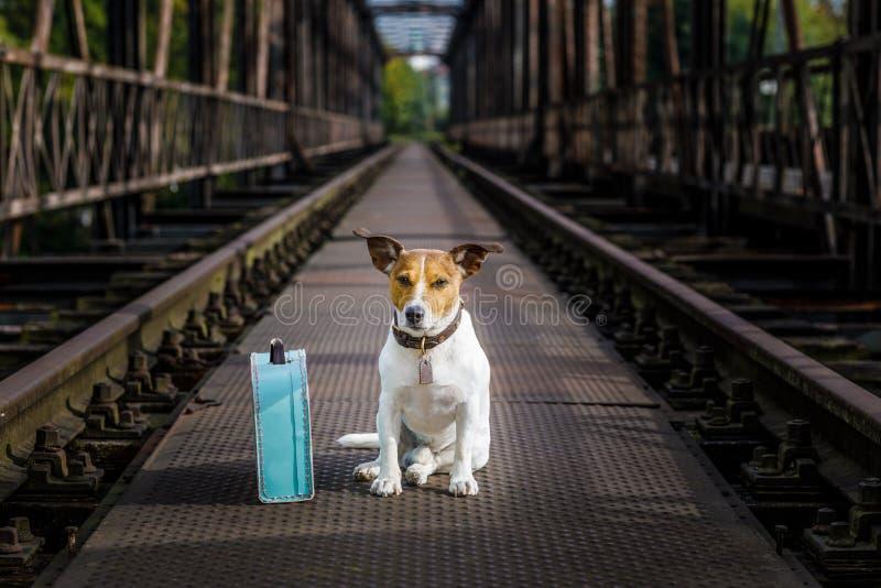 Verloren en daklozen verlaten hond stock fotografie