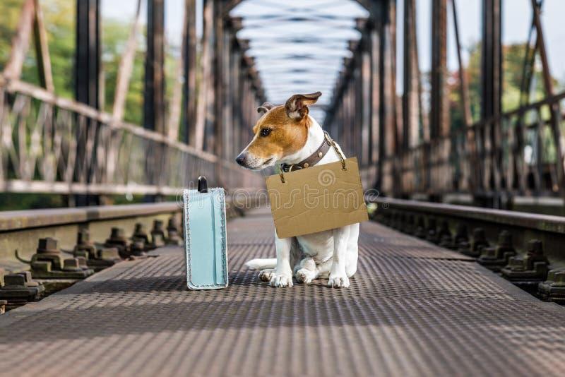 Verloren en daklozen verlaten hond royalty-vrije stock afbeelding