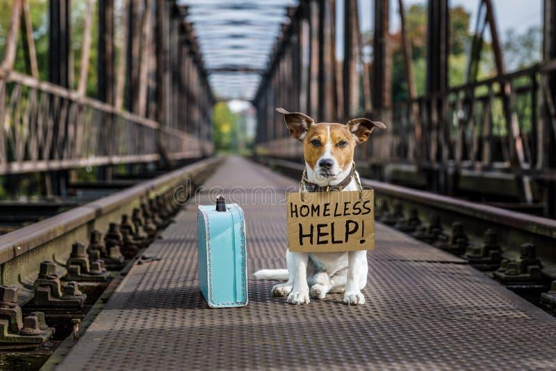 Verloren en daklozen verlaten hond stock foto