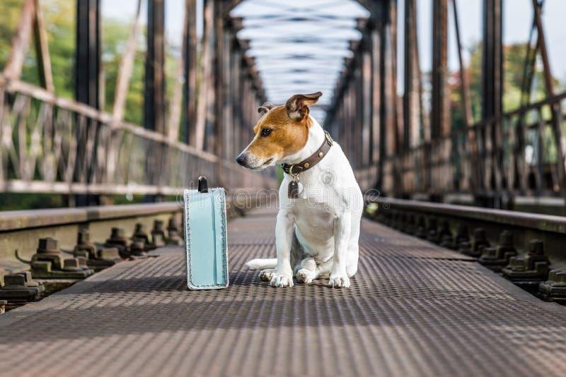 Verloren en daklozen verlaten hond stock foto's