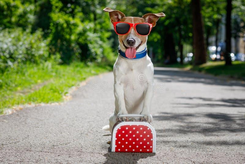 Verloren en daklozen verlaten hond stock afbeelding