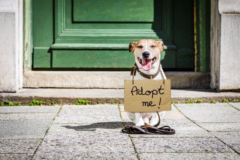 Verloren en daklozen verlaten hond royalty-vrije stock fotografie