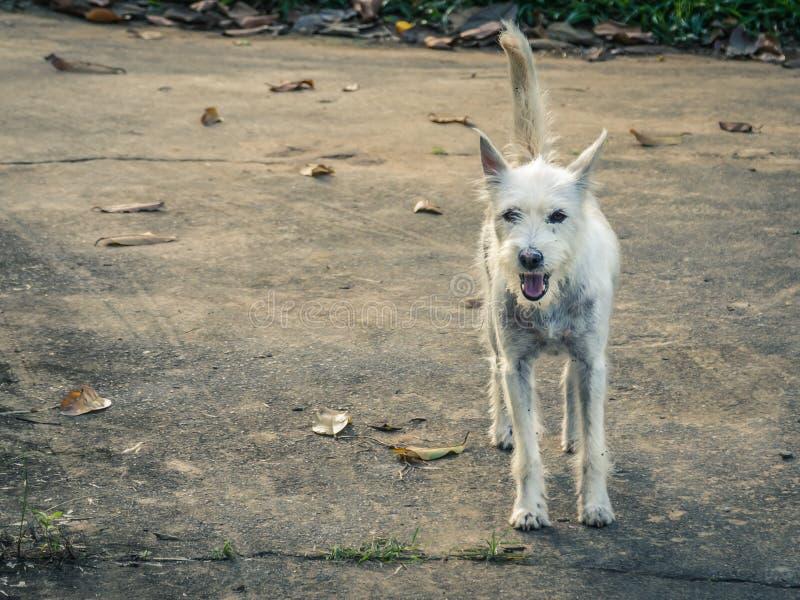 Verloren hond op een vuile witte veer die op de concrete vloer lopen royalty-vrije stock afbeeldingen