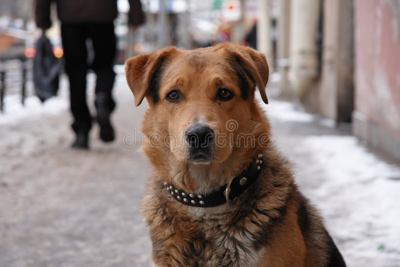 Verlorener Hund lizenzfreie stockfotos