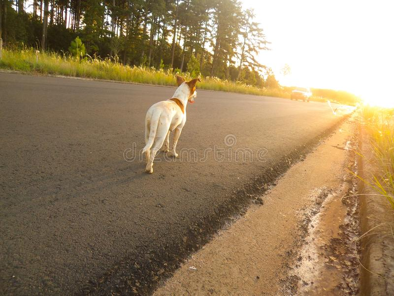Verlorener Hund, der einen Sonnenuntergang aufpasst Denken, wenn jemand ihn retten wird lizenzfreie stockfotos