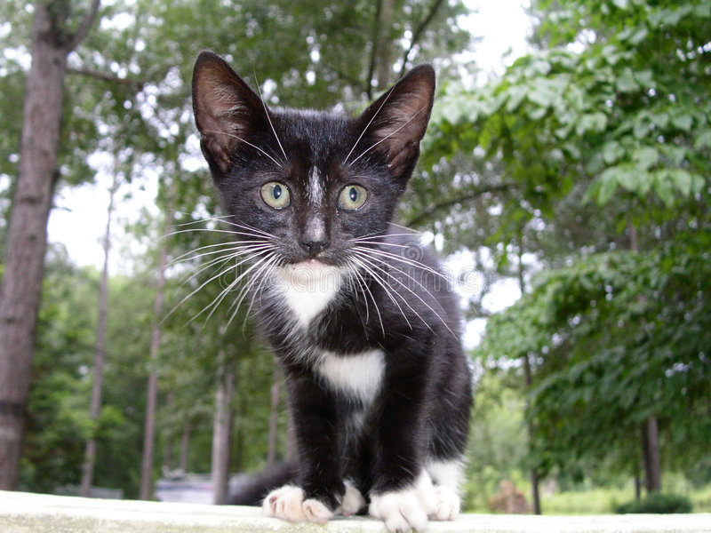 Verlorenes Kätzchen lizenzfreie stockfotografie