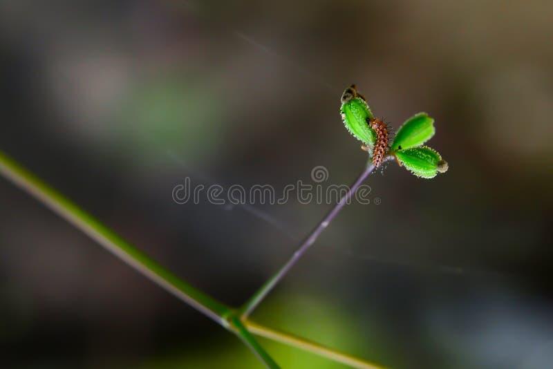 Verme che mangia i semi dell'erba fotografia stock libera da diritti