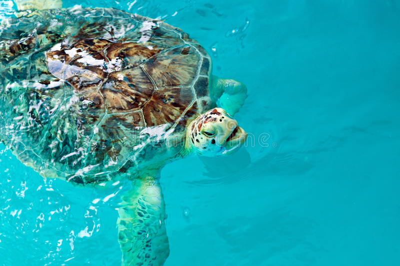 vermelha черепахи моря острова coroa Бахи Бразилии стоковое фото rf