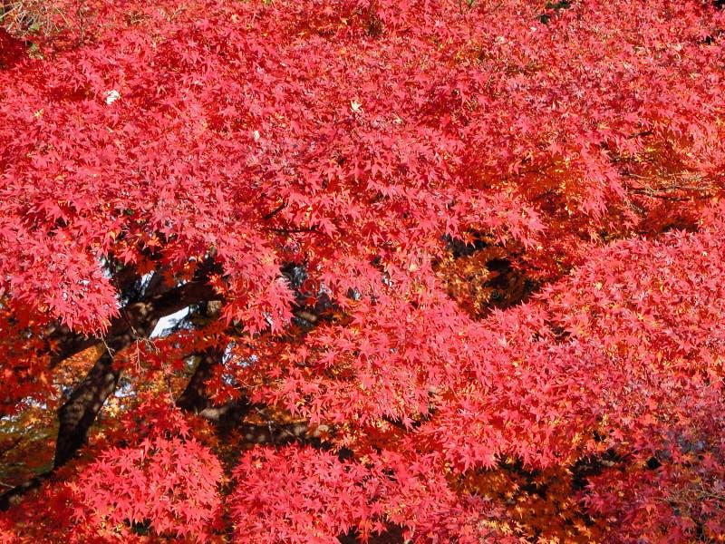 Download Vermelho imagem de stock. Imagem de bordo, estação, japonês - 56179
