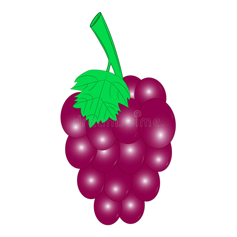Vermelho da uva ilustração do vetor