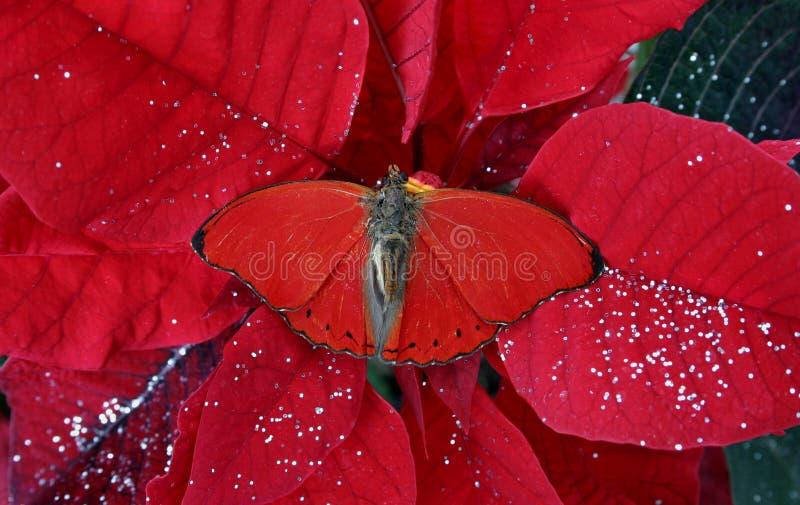 Download Vermelho do Natal imagem de stock. Imagem de sparkle, poinsettia - 366477