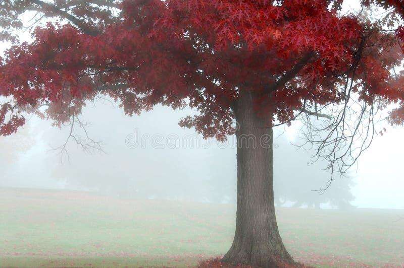Vermelho do outono fotos de stock royalty free