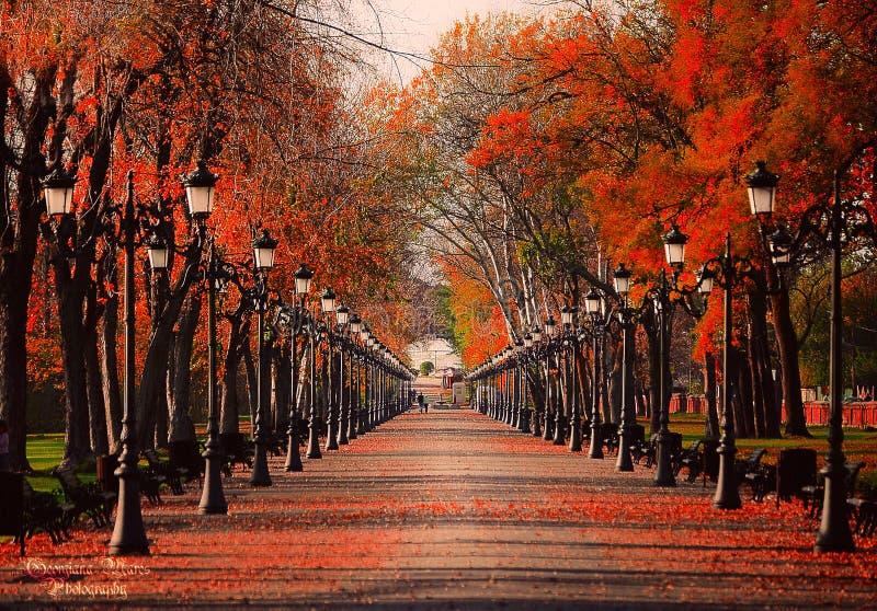 Vermelho do outono fotografia de stock royalty free
