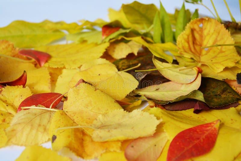 Vermelhos amarelos vermelhos verdes do outono secam as folhas, imagem romântica foto de stock royalty free