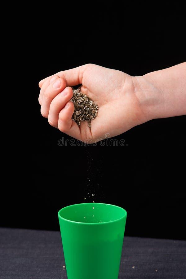 Vermiculite στα χέρια μιας γυναίκας κλείστε επάνω Καννάβεις εδαφολογικής ανάπτυξης Ένα μίγμα γης, περλίτη και vermiculite στοκ φωτογραφίες