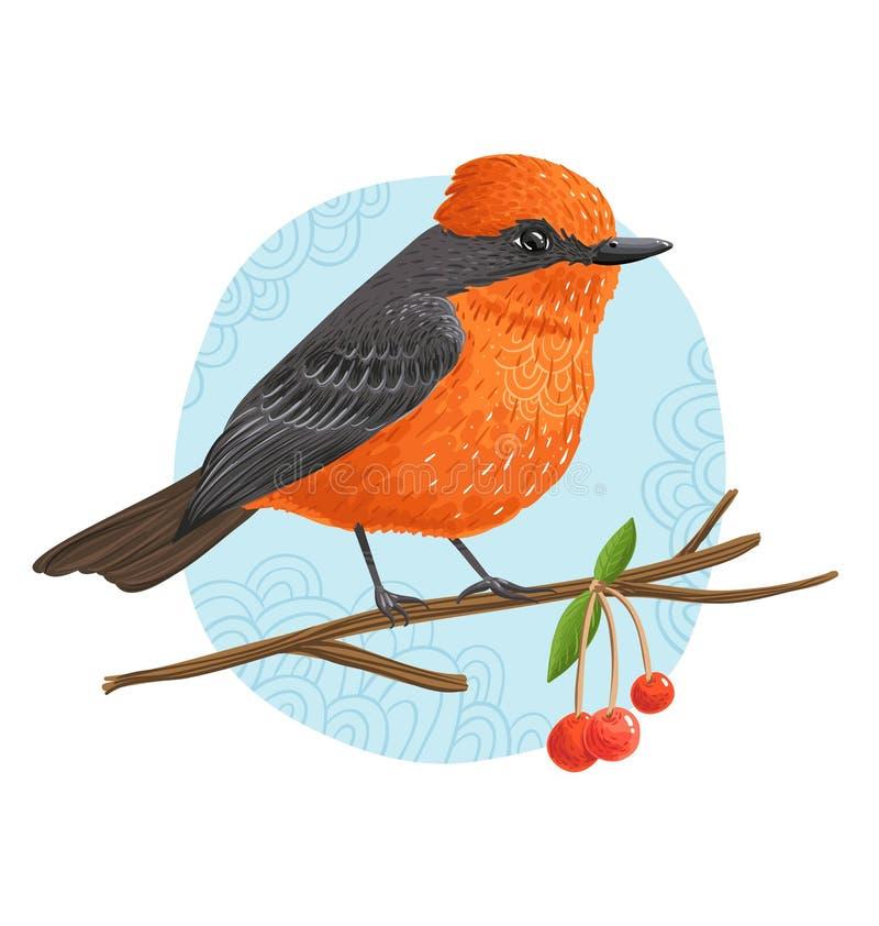 Download Vermilion Flycatcher stock illustration. Illustration of feathering - 38830783