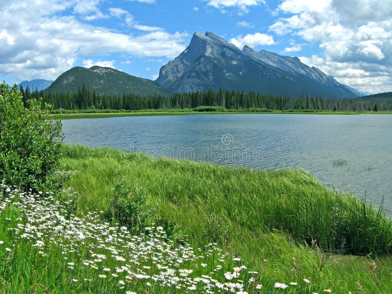Vermilion Lakes with daisies. Vista with peaks and daisies, Vermilion Lakes near Banff, Alberta, Canada stock photo