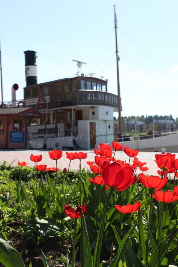 Vermilion tulipany II zdjęcie stock