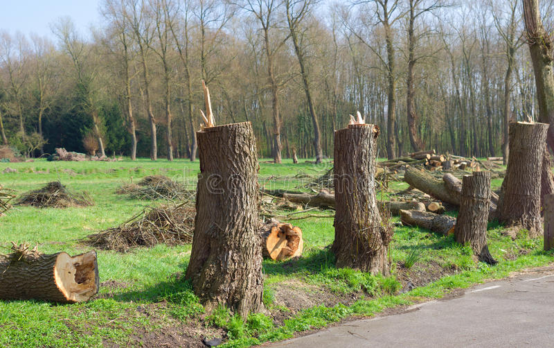Verminder bomen stock foto's