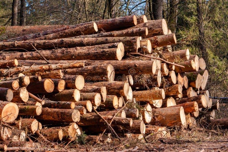 Verminder boom het programma opent het bos stock afbeelding