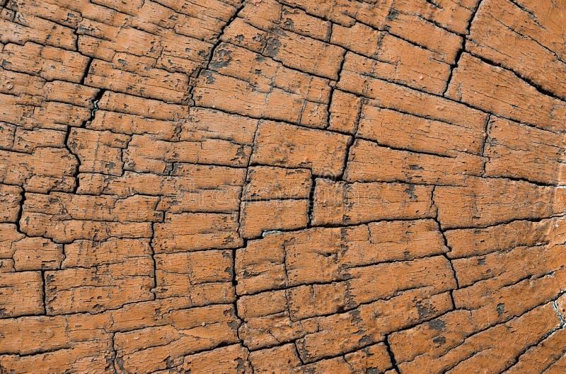 Verminder boom met jaarringen als houten textuur stock afbeelding