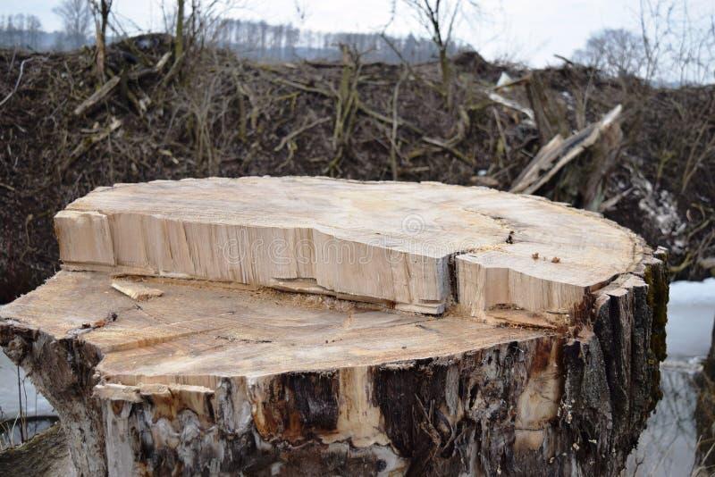 Verminder de bomen De houten industrie Het Felling en het snijden van bossen Levering van boomboomstammen stock afbeelding